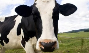 Raw Milk Truths Revealed