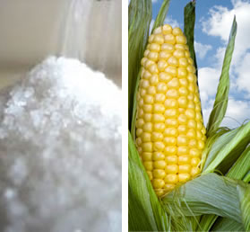 Sugar vs. High Fructose Corn Syrup
